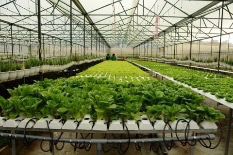 Ứng dụng giải pháp Mesh Network ACIS Technology vào nông nghiệp công nghệ cao 24