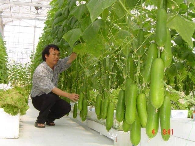 "Từ ""smarthome"" đến ""smartfarm"" – Tại sao không? 6"